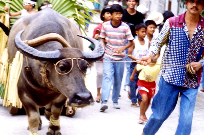 水牛(カラバオ) 祭り
